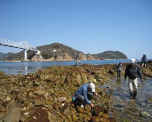 倉橋鹿島生物観察