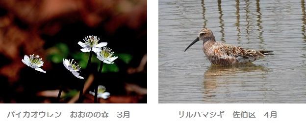 春の花・鳥