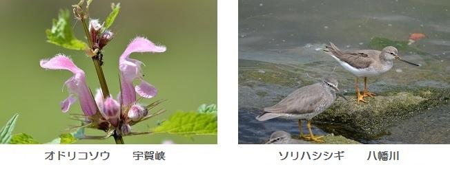 初夏の花・鳥