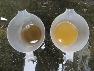実験後の水の色の比較(左:腐葉土、右:真砂土)