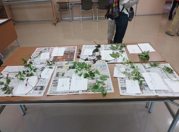 ツル植物の展示