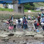 太田川放水路干潟の生き物観察会