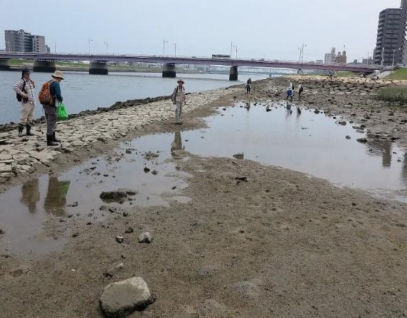 一番南側の湿地(橋は己斐大橋)