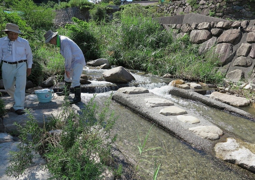 水生生物採集場所(ホタル橋上流)