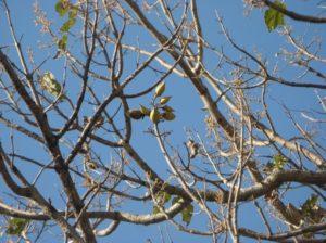 校庭で見つけた樹木の実(一部)