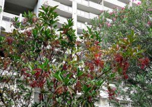 サンゴジュの果実 キョウチクトウの花